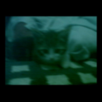 Ghost Cat (single) cover art