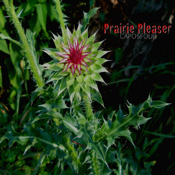 Prairie Pleaser cover art