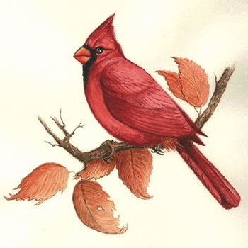 Songbird Stock Illustrations. 266 Songbird illustrations and clip