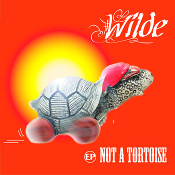 Not a Tortoise cover art