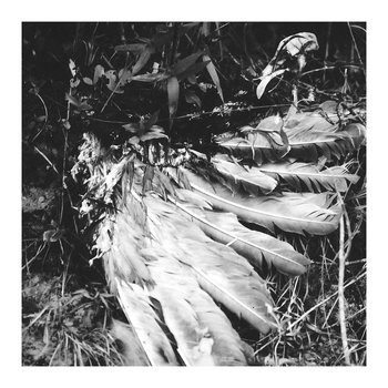 Feathers and Furs cover art