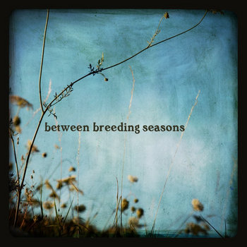 between breeding seasons cover art