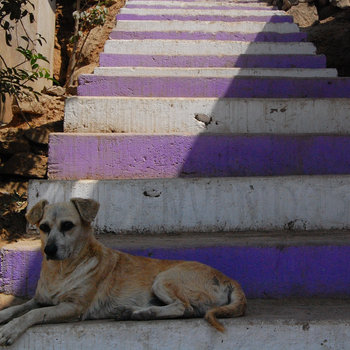 Puppy on Stairs EP cover art