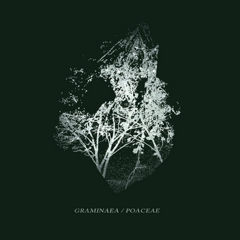 Graminaea/Poaceae Split cover art